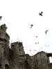 Ruinas del Convento de Dominicos